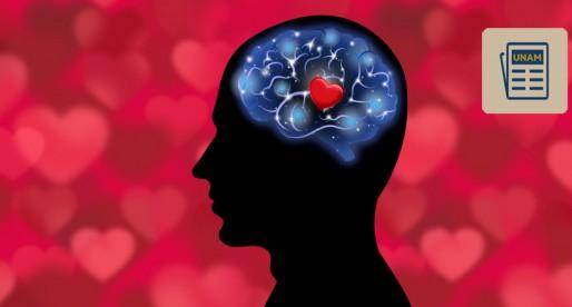 El amor se produce en el cerebro, no en el corazón