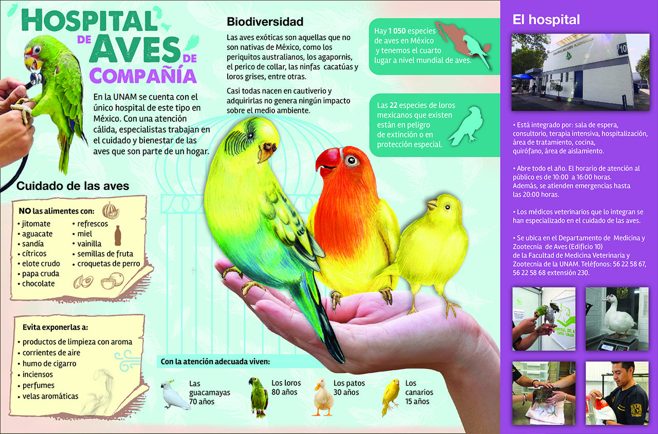 aves de compañia