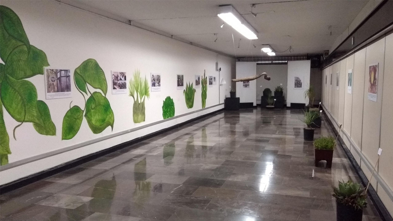 expo_botanico_contenido2