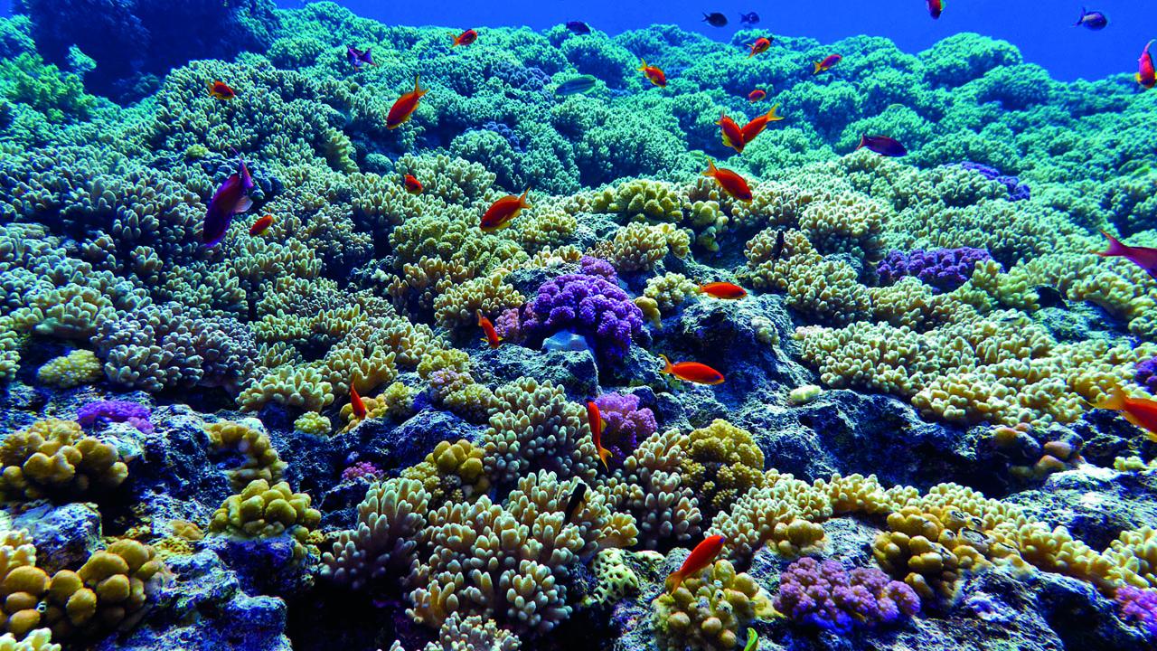 coral_contenido2