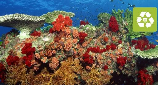 Premian a universitario por trabajo a favor de arrecifes de coral
