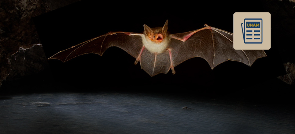 UNAM alerta sobre peligro de extinción de murciélagos