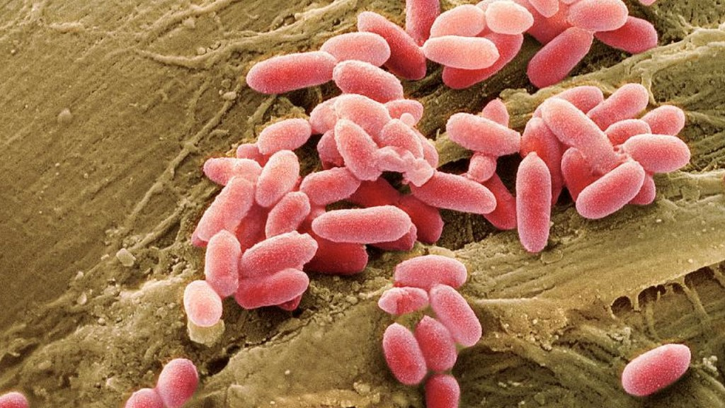 bacterias_contenido2