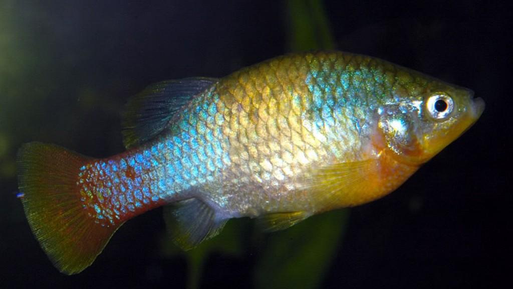 peces_contenido1