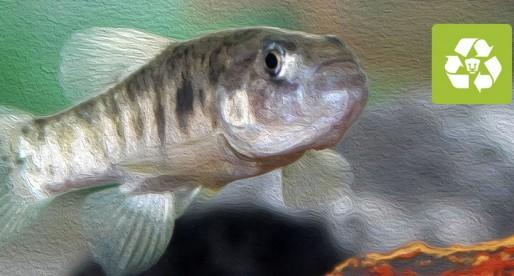 UNAM prepara estrategia para conservación de peces de agua dulce