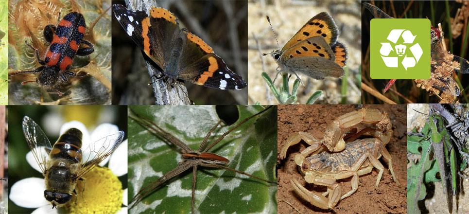 Trabaja UNAM en monitorear diversidad biológica