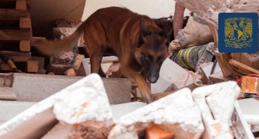 Destacada participación de Binomios de la UNAM en tareas de rescate