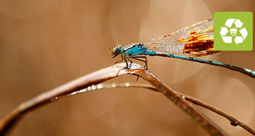 Al menos 100 especies de libélulas están en peligro de extinción