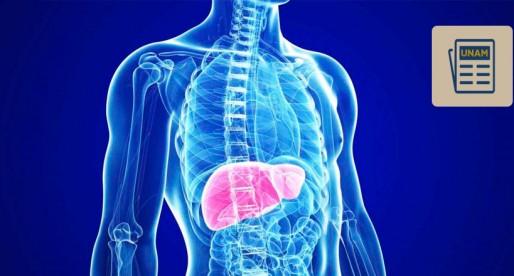¿Qué sabes sobre la Fibrosis hepática?
