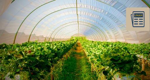 UNAM quiere fomentar la creación de agroindustrias basadas en la deshidratación