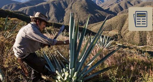Descubren nuevas especies de agave en Oaxaca