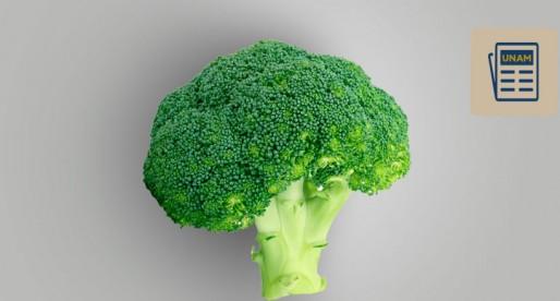 Identifica UNAM propiedades anticancerpigenas en brócoli, col y otros