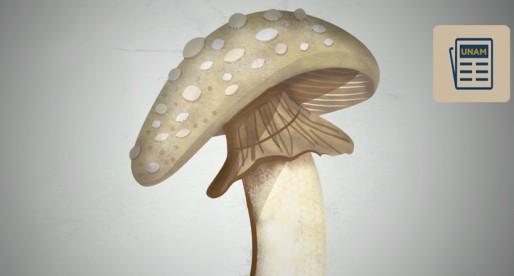 Estos hongos pueden intoxicarte