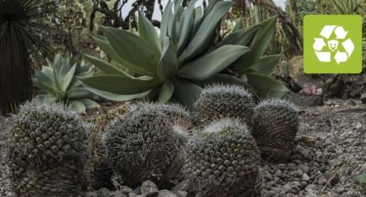 Jardín Botánico concentra el 7.5% de la diversidad vegetal conocida en México