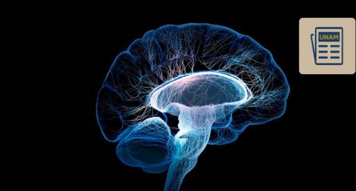 UNAM te explica los efectos de la droga en el cerebro