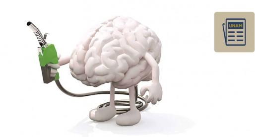La importancia de la glucosa en el cerebro