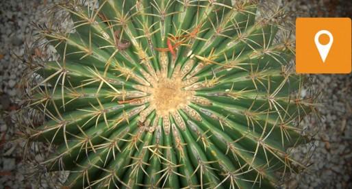 Conoce las diversas actividades dentro del Jardín Botánico de la UNAM
