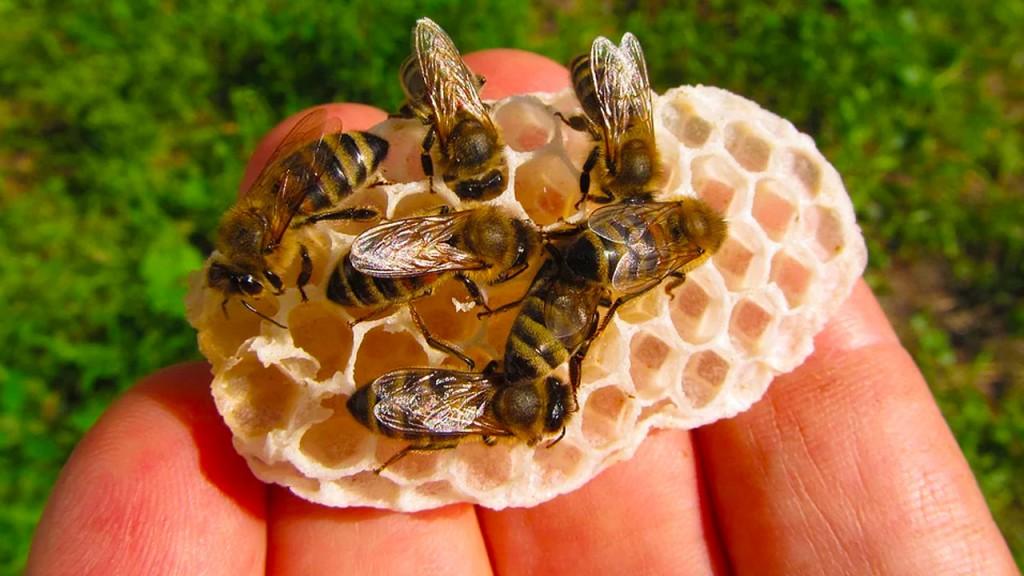 abejas_contenido2