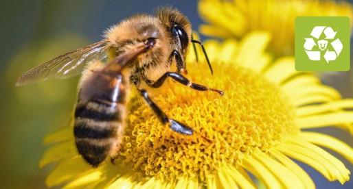¿Están en peligro las abejas en México?
