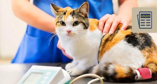 ¿Sabías que tu gato puede tener anorexia?