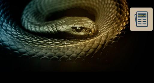Universitario recibe premio por antiveneno contra mordeduras de serpiente
