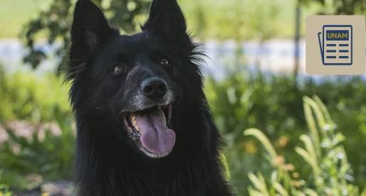 UNAM participará en campeonato mundial de perros de rescate