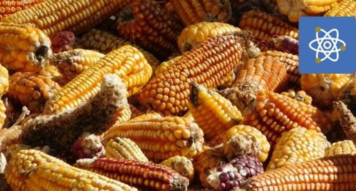 Universitarios desarrollan sistema que protege granos y semillas
