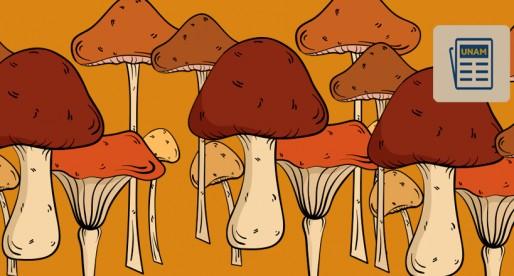 Intoxicación por hongos, con alto potencial de mortalidad