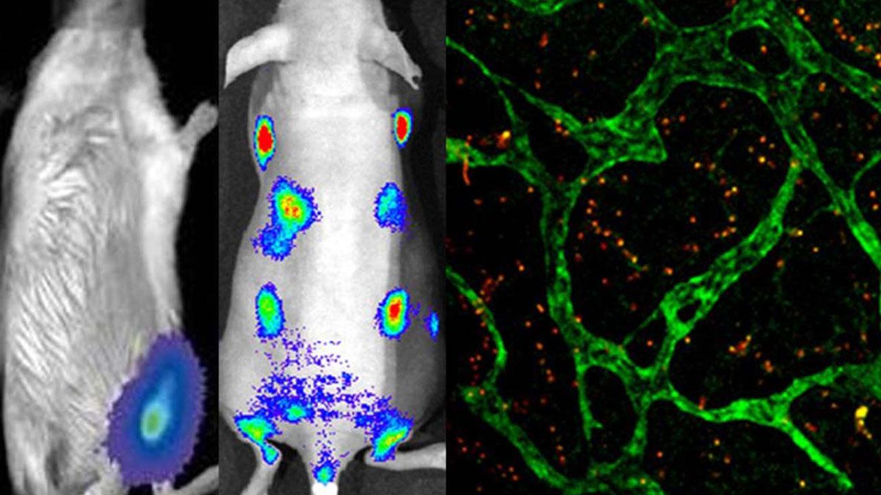 bioluminiscencia_contenido1