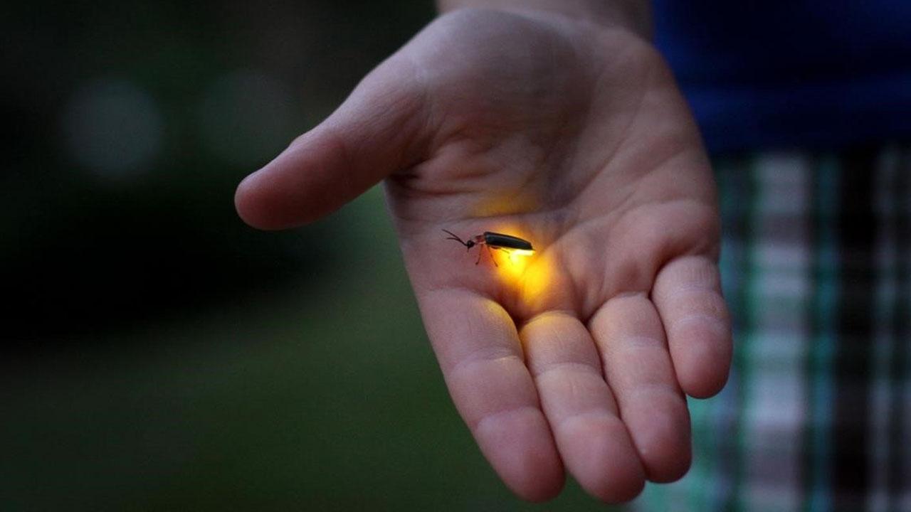 bioluminiscencia_contenido2