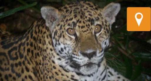 Conoce el Laboratorio de Ecología y Conservación de Vertebrados de la UNAM