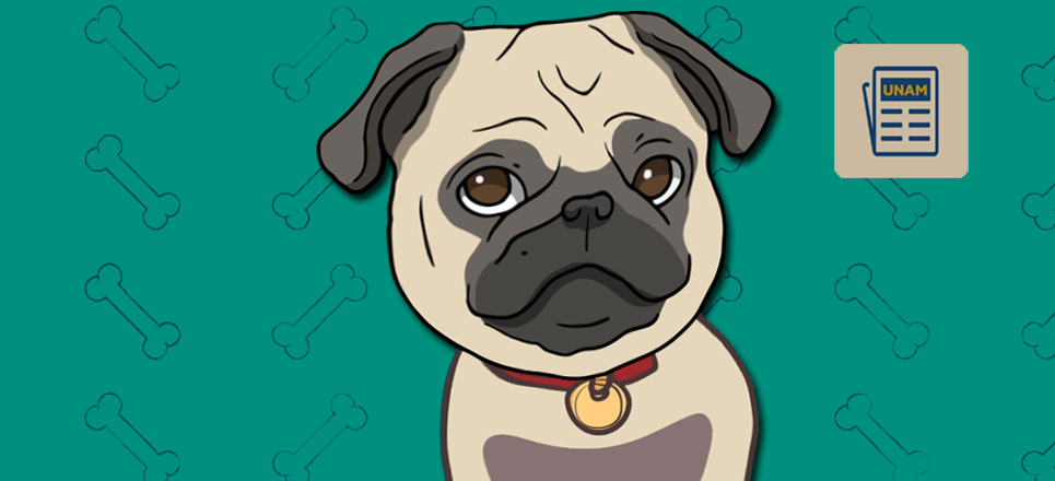 ¿Sabes qué alimentos pueden causar daños en tu mascota?