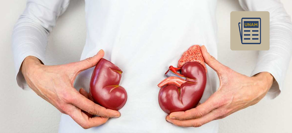 ¿Qué desalienta la donación de órganos en México?