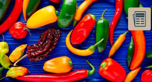 En México hay 250 especies de chiles