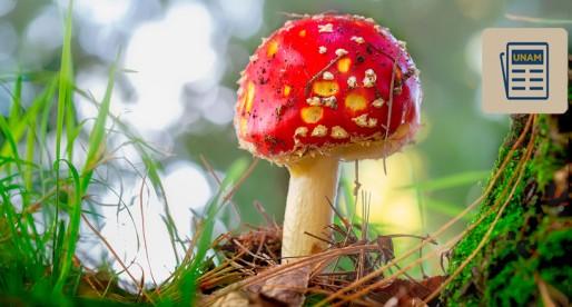México aún padece la intoxicación por hongos silvestres