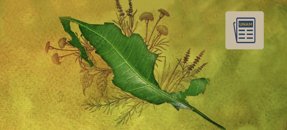 México, el segundo país con más plantas medicinales registradas