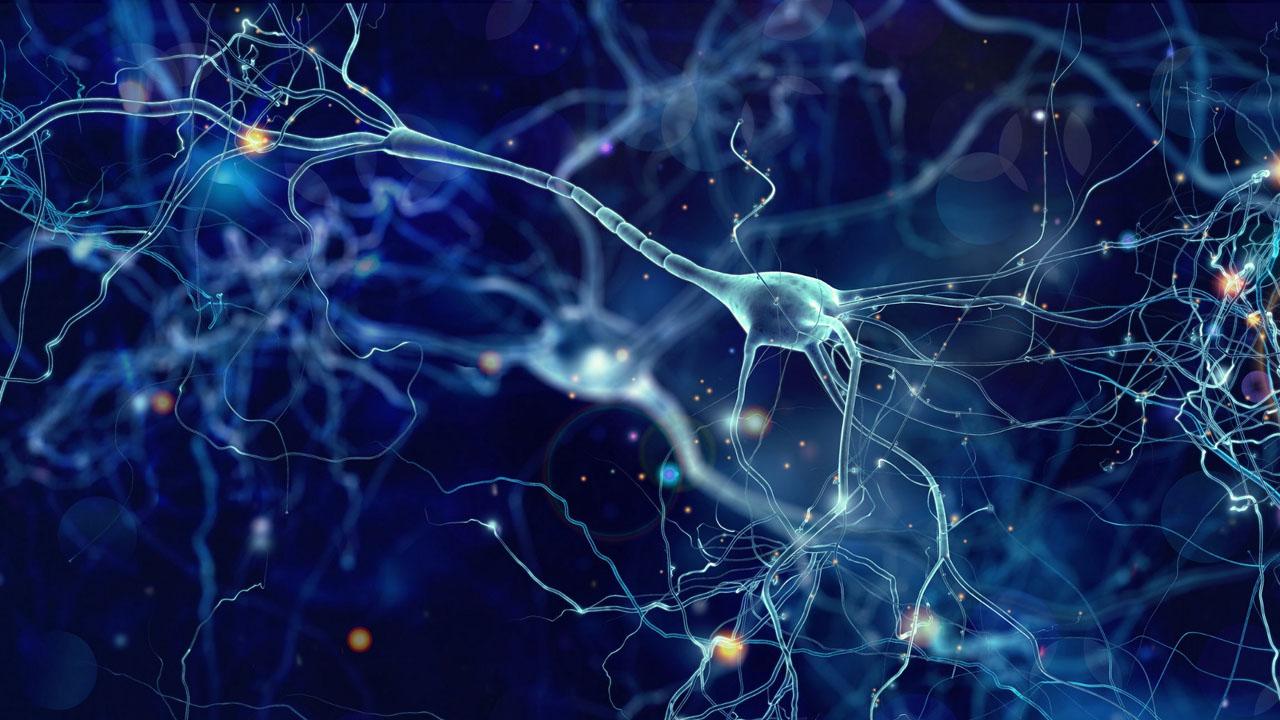 neuronas_contenido2