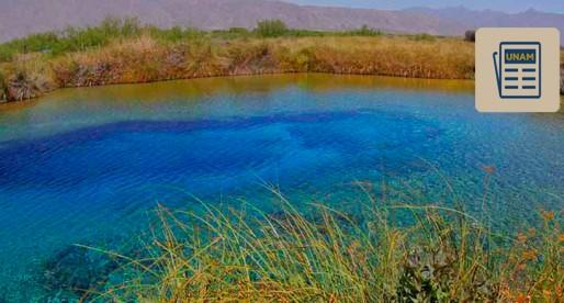 Alertan sobre pérdida del 60% de los humedales en México