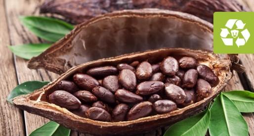 Se agudiza la crisis de plantaciones de cacao en México