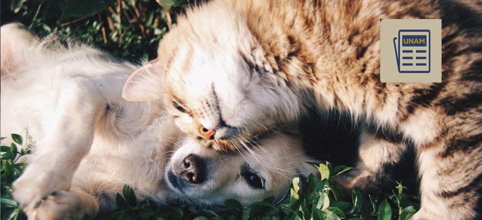 ¿Qué debes saber sobre los animales de compañía?