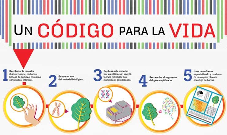 codigoBARRASgenetico2