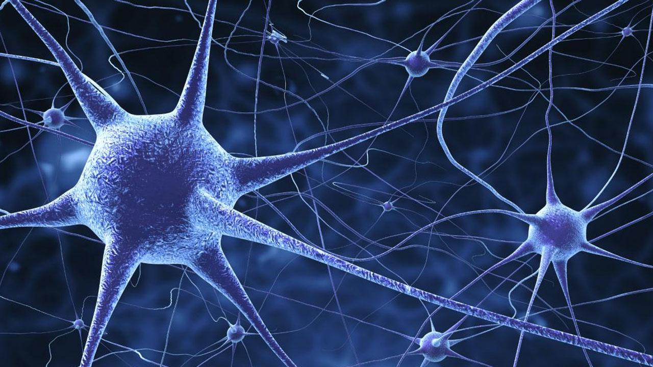 neuronas_contenido2 (1)