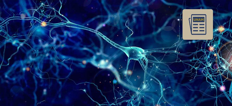 ¿El ejercicio puede estimular la creación de nuevas neuronas?