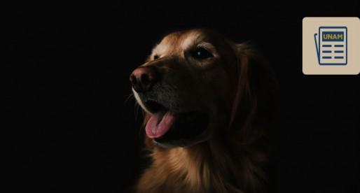 Cómo afrontar la pérdida de nuestro animal de compañía
