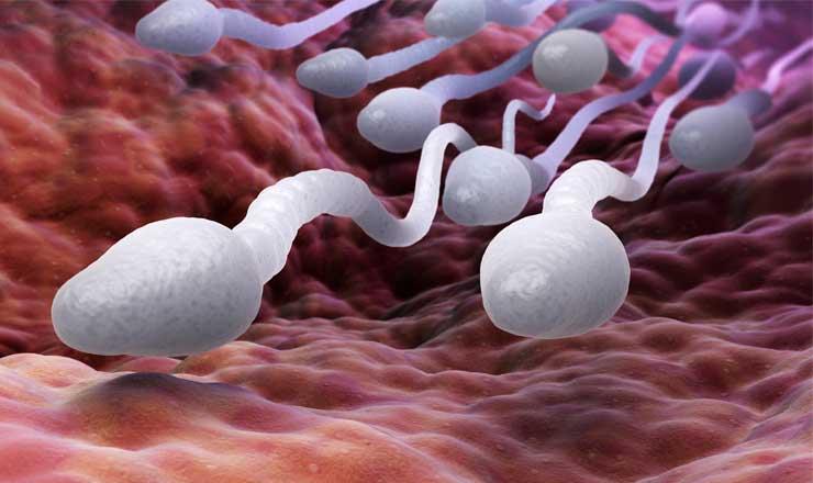 espermatozoides2