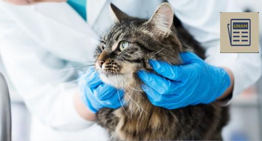 ¿Sabes qué enfermedades pueden atacar a tu gato?