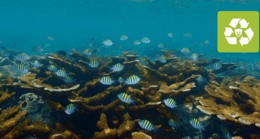 Descubre los misterios de la biodiversidad acuática