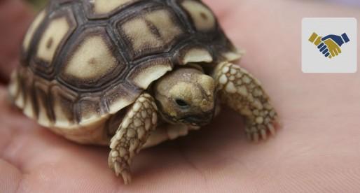Conoce el Hospital Veterinario de Especialidades en Fauna Silvestre y Etología Clínica
