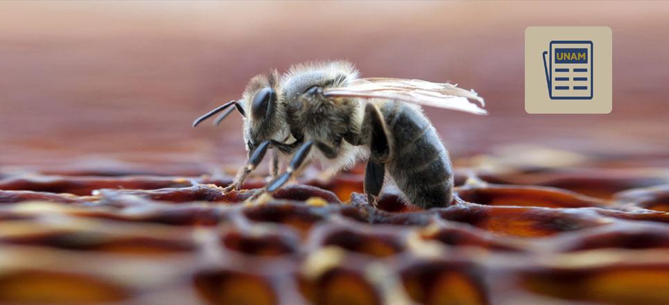 El veneno de abeja tiene efectos positivos contra el mal del Parkinson
