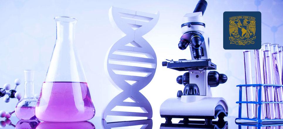 Académicas de la UNAM, ganadoras de beca para Mujeres en la Ciencia